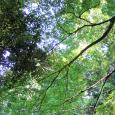 こもれび。 Sunlight through trees