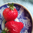 春の艶赤。 Amaou strawberry