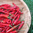 燃える赤。赤い艶。 Red pepper