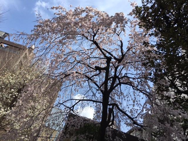 Shidare Tawara-machi