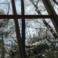 桜吹雪を見た。 Sakura cafe window
