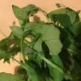 刻む前に。 7 herbs