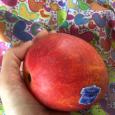 完熟マンゴー。Mango from Taiwan