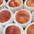 北限で育った桃。 Peach 2019