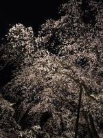 Rikugi-en_Shidare