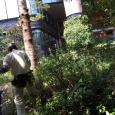 庭師。 Gardener