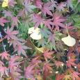 晩秋の。 Autumn leaves