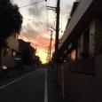 キュン。 Sunset