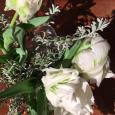 散歩。 Aalt vase & white tulip