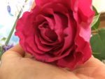 Rose 070620