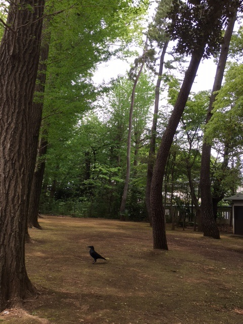 祈りの場。 Crow